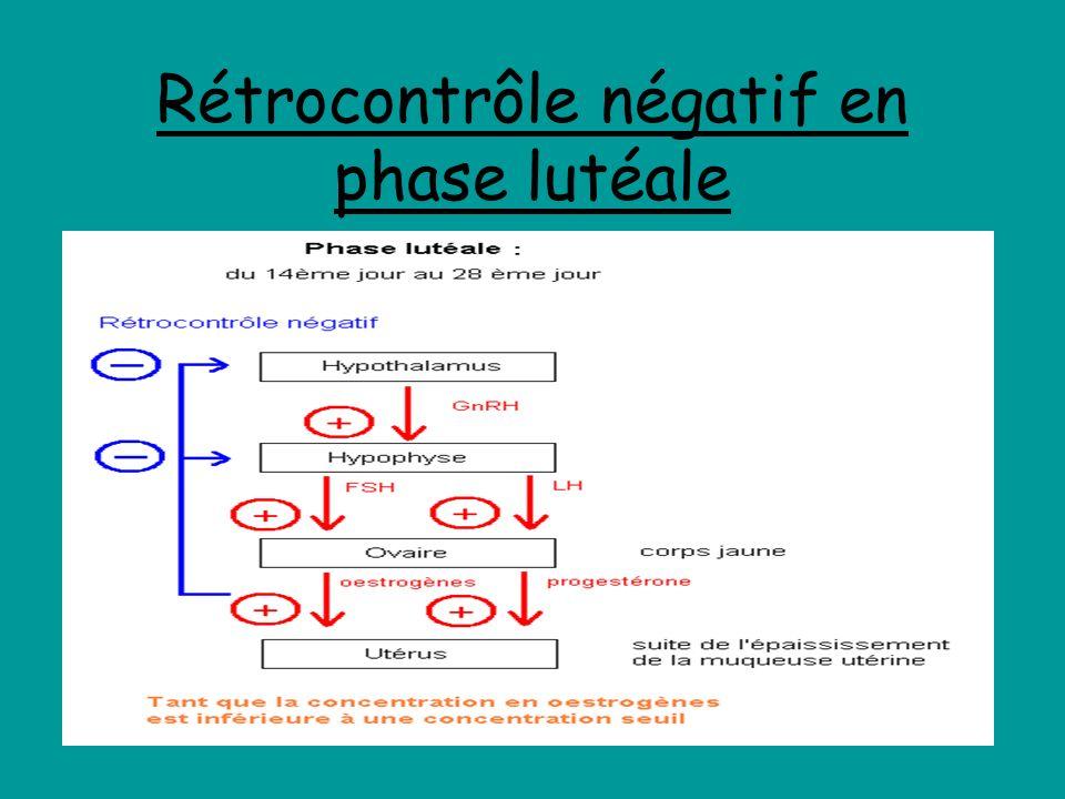 Rétrocontrôle négatif en phase lutéale