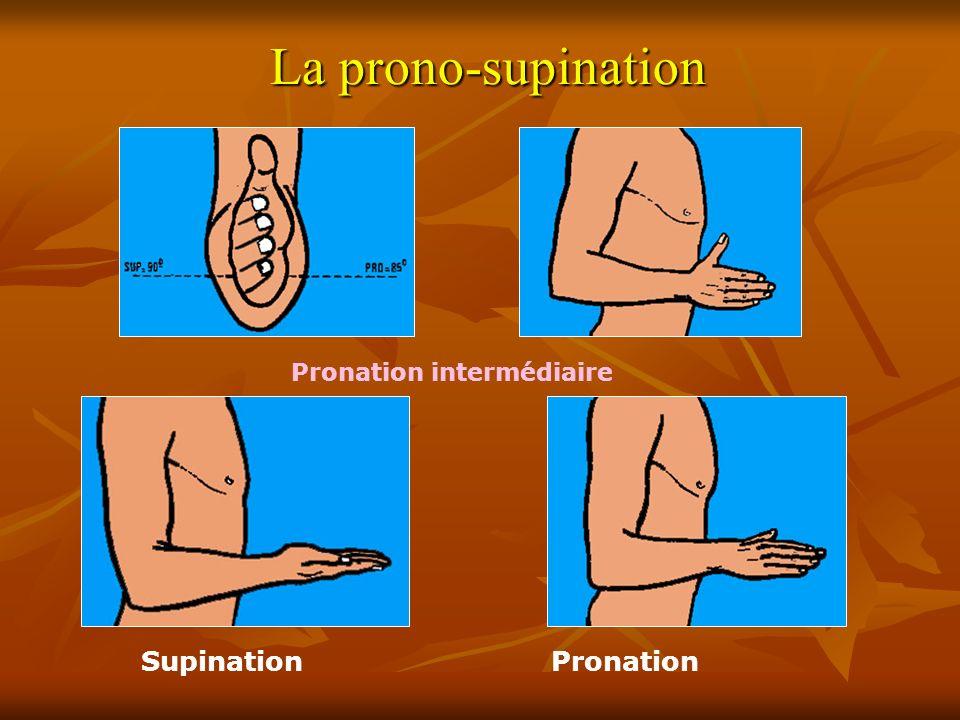 Pronation intermédiaire