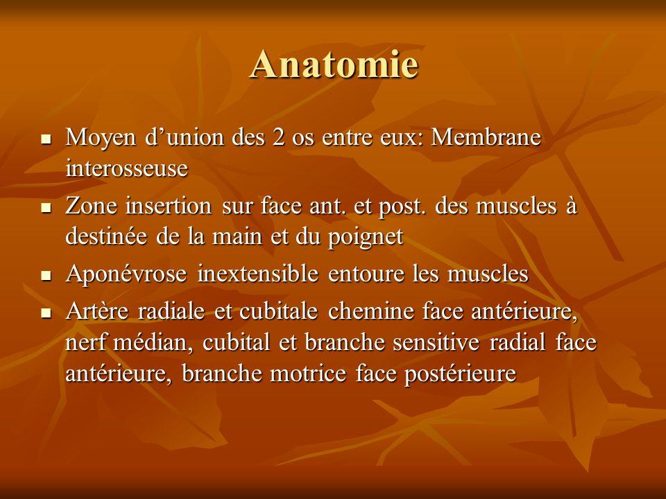 Anatomie Moyen d'union des 2 os entre eux: Membrane interosseuse