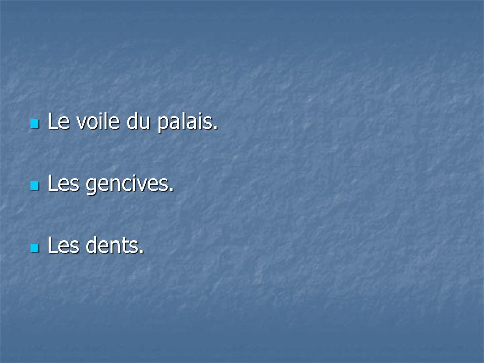 Le voile du palais. Les gencives. Les dents.