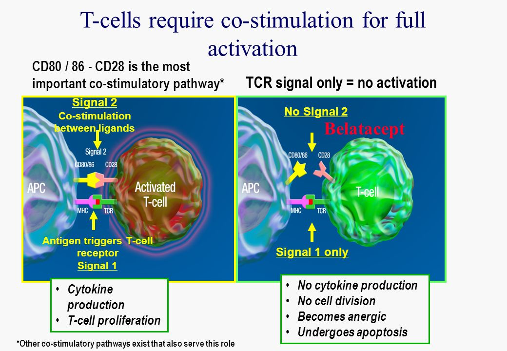 T-cells require co-stimulation for full activation