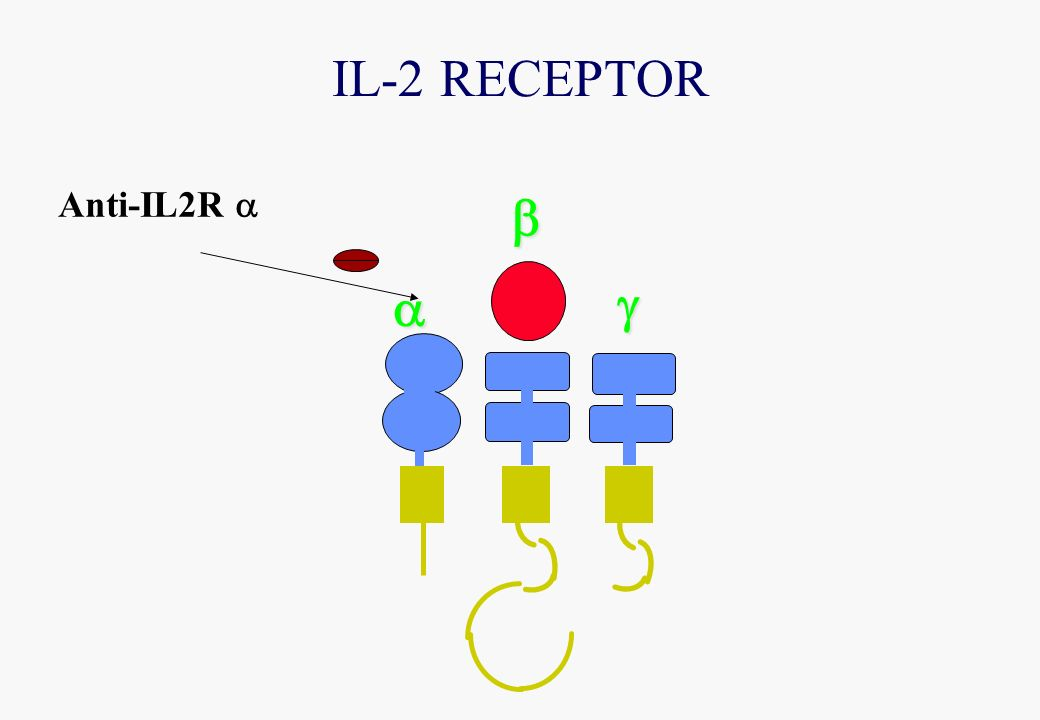 IL-2 RECEPTOR Anti-IL2R a a g b
