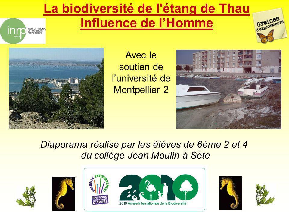 La biodiversité de l étang de Thau