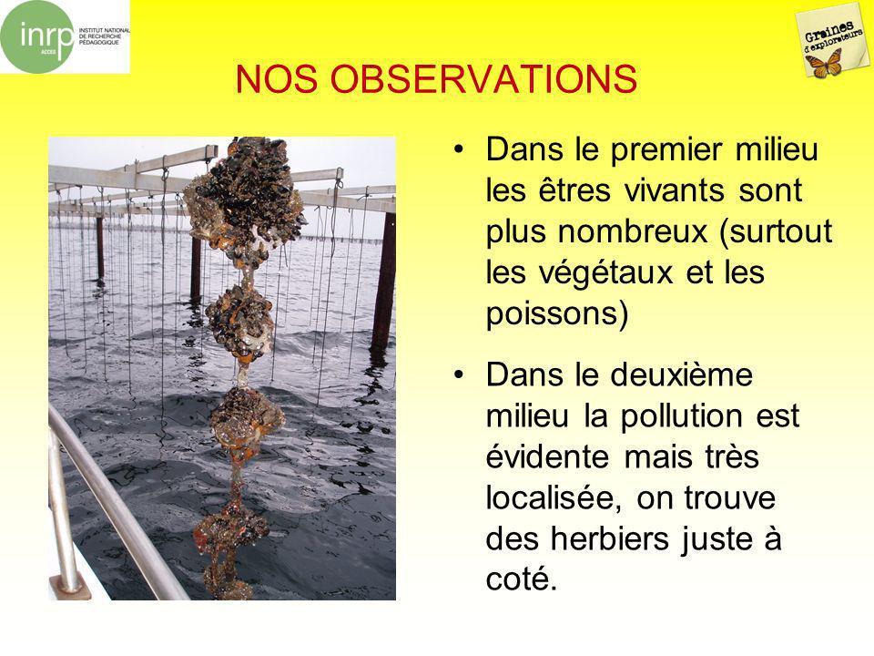 NOS OBSERVATIONS Dans le premier milieu les êtres vivants sont plus nombreux (surtout les végétaux et les poissons)