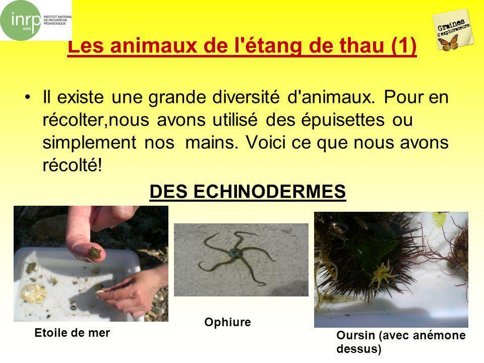 Les animaux de l étang de thau (1)
