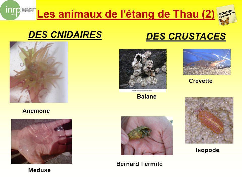 Les animaux de l étang de Thau (2)