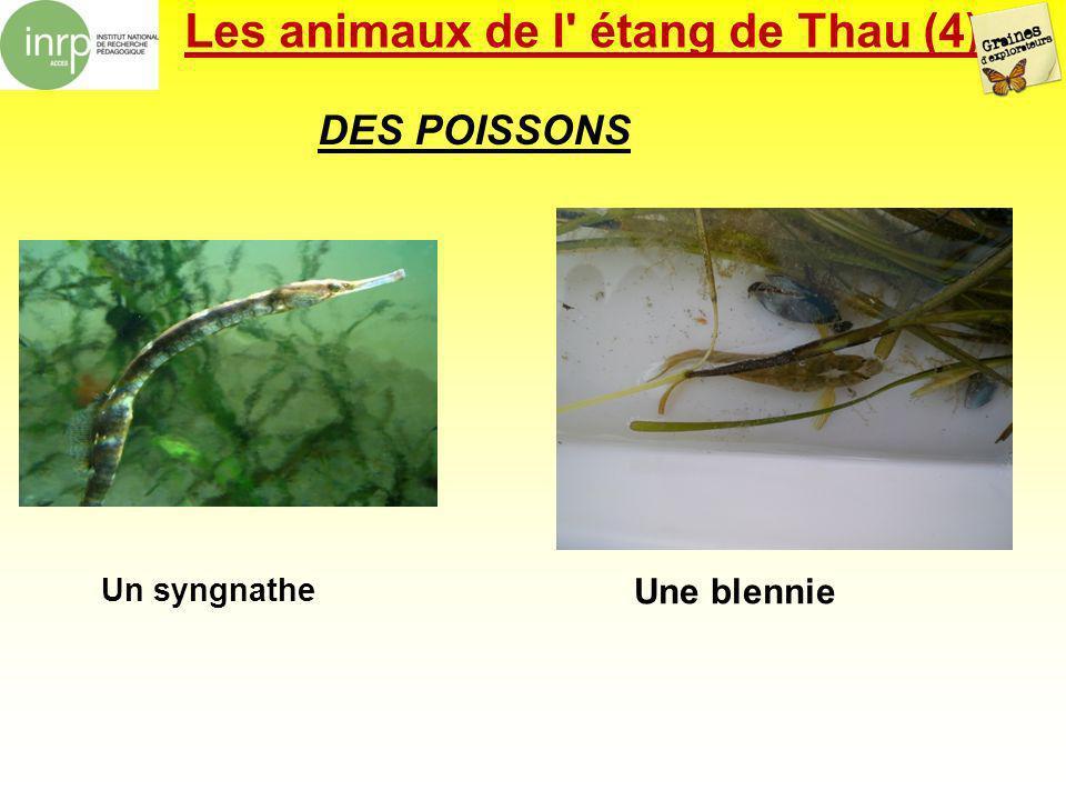 Les animaux de l étang de Thau (4)