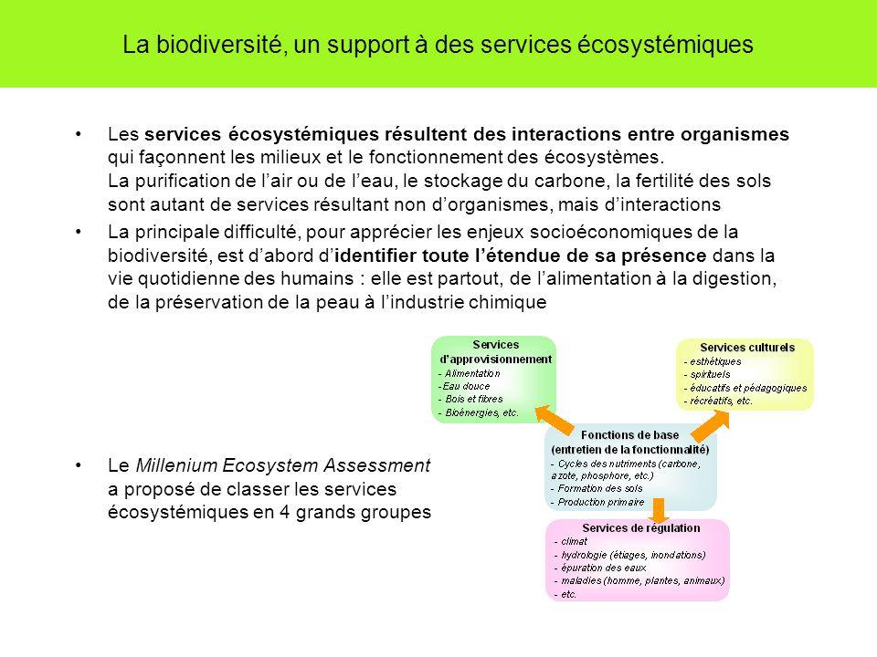 La biodiversité, un support à des services écosystémiques