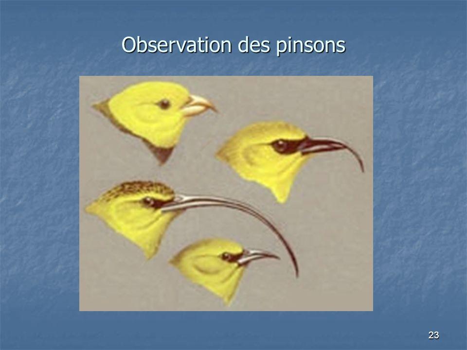 Observation des pinsons