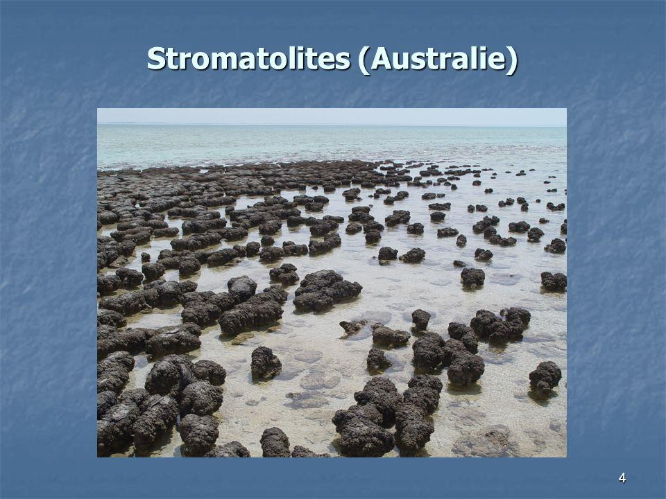 Stromatolites (Australie)