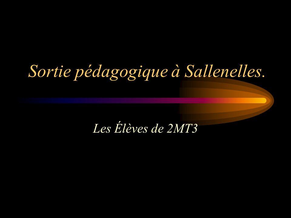 Sortie pédagogique à Sallenelles.