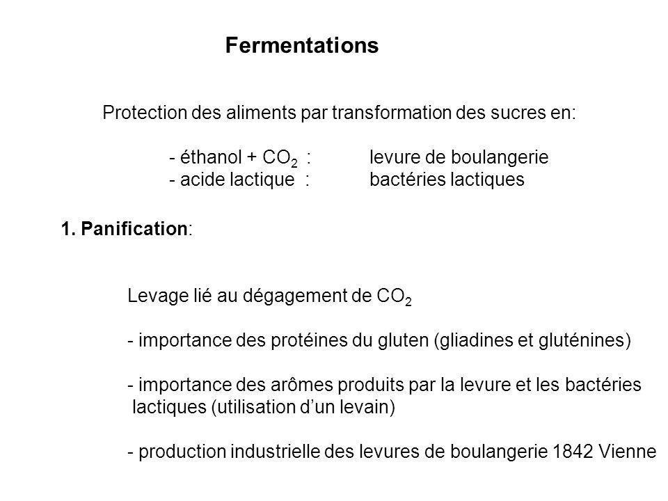 Fermentations Protection des aliments par transformation des sucres en: - éthanol + CO2 : levure de boulangerie.