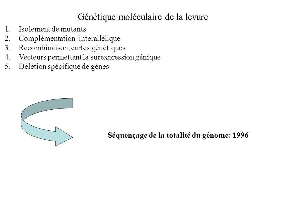 Génétique moléculaire de la levure