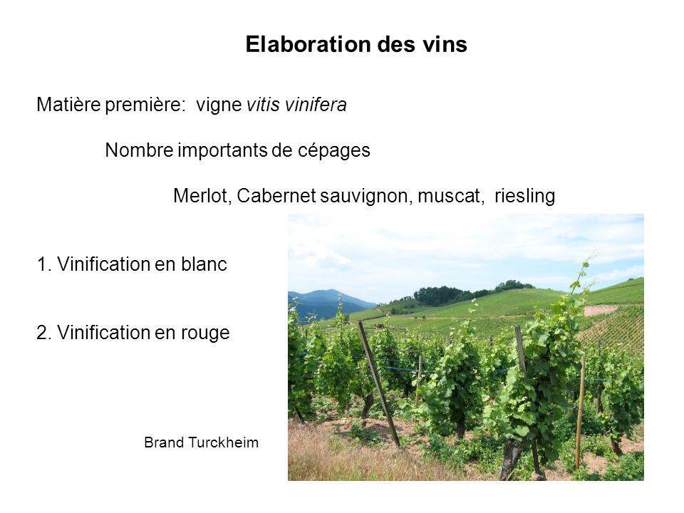 Elaboration des vins Matière première: vigne vitis vinifera