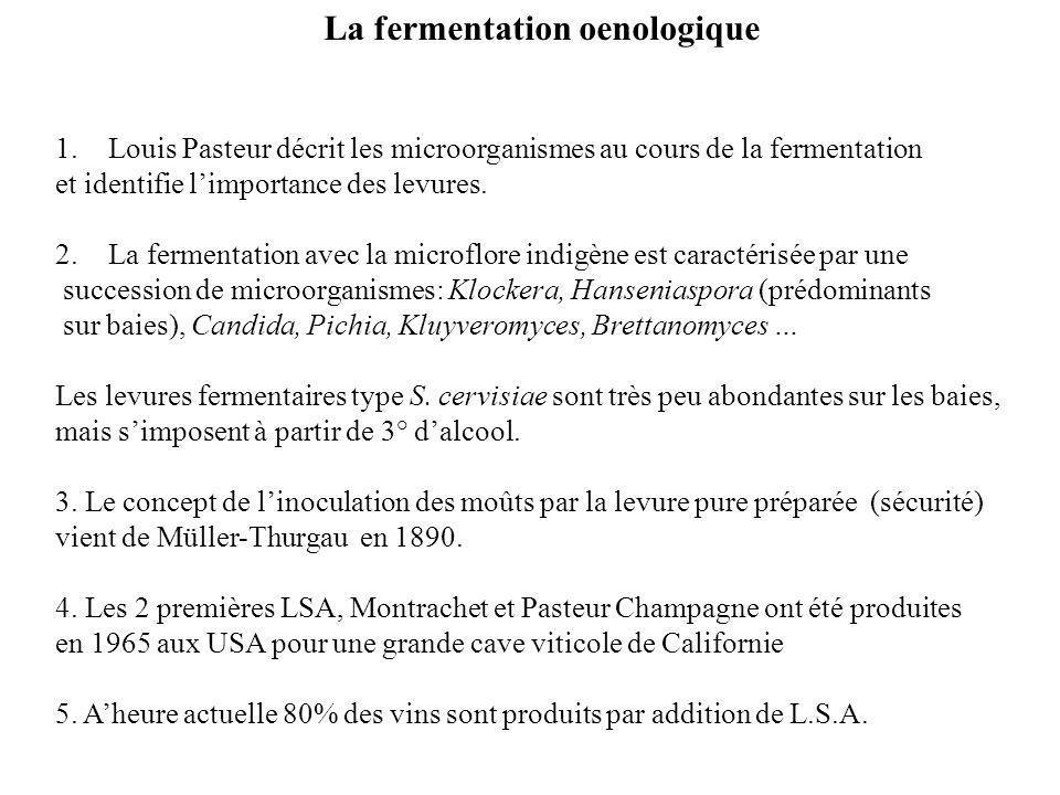 La fermentation oenologique