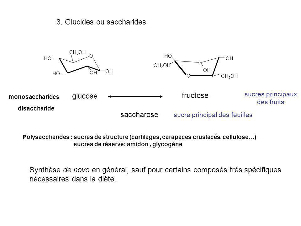 3. Glucides ou saccharides