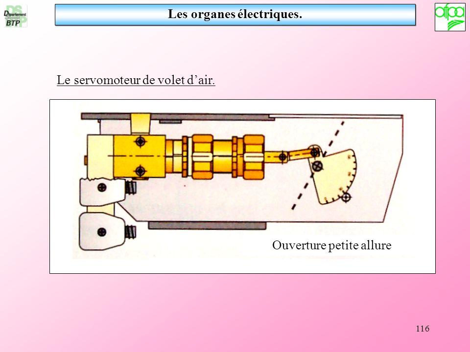 Les organes électriques.