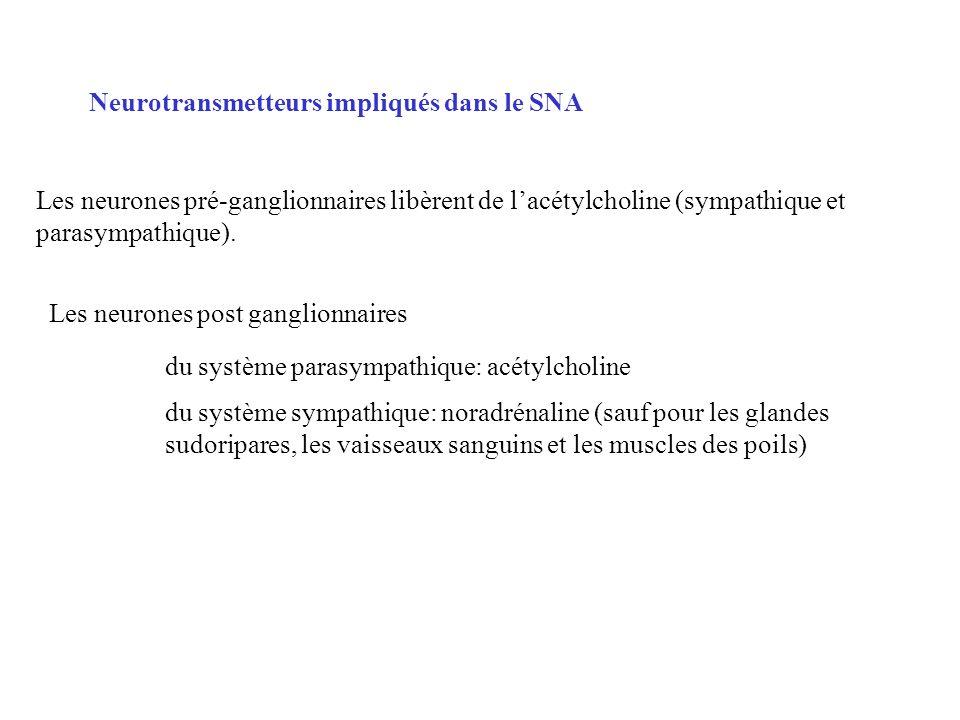 Neurotransmetteurs impliqués dans le SNA
