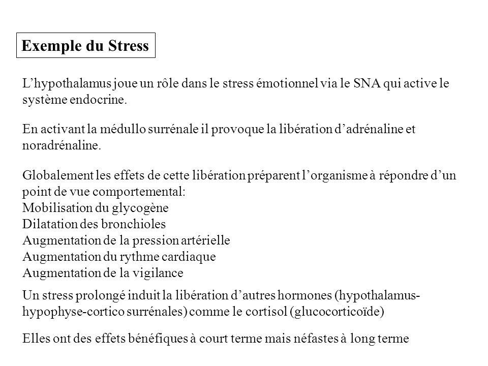 Exemple du Stress L'hypothalamus joue un rôle dans le stress émotionnel via le SNA qui active le système endocrine.