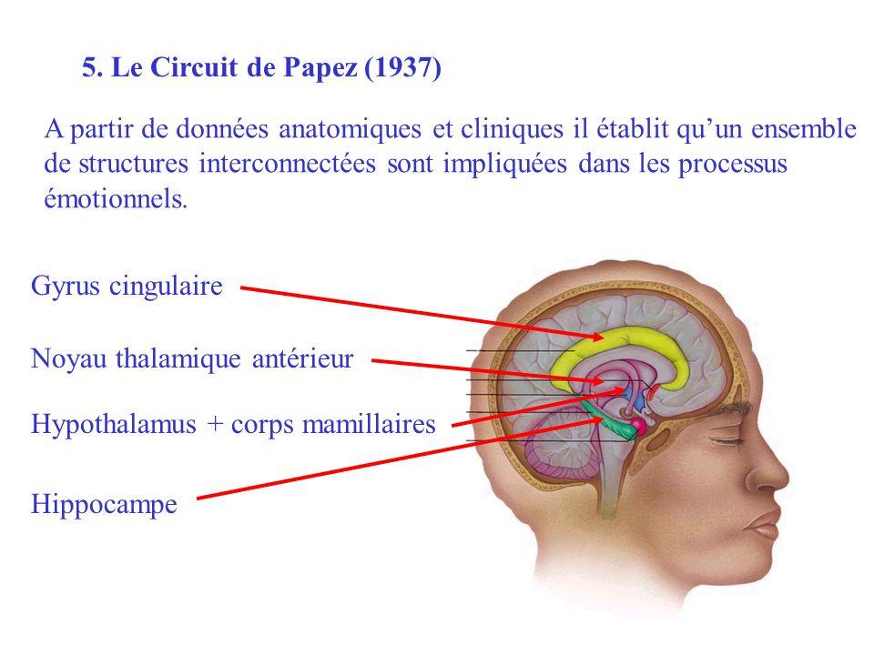 5. Le Circuit de Papez (1937) A partir de données anatomiques et cliniques il établit qu'un ensemble.