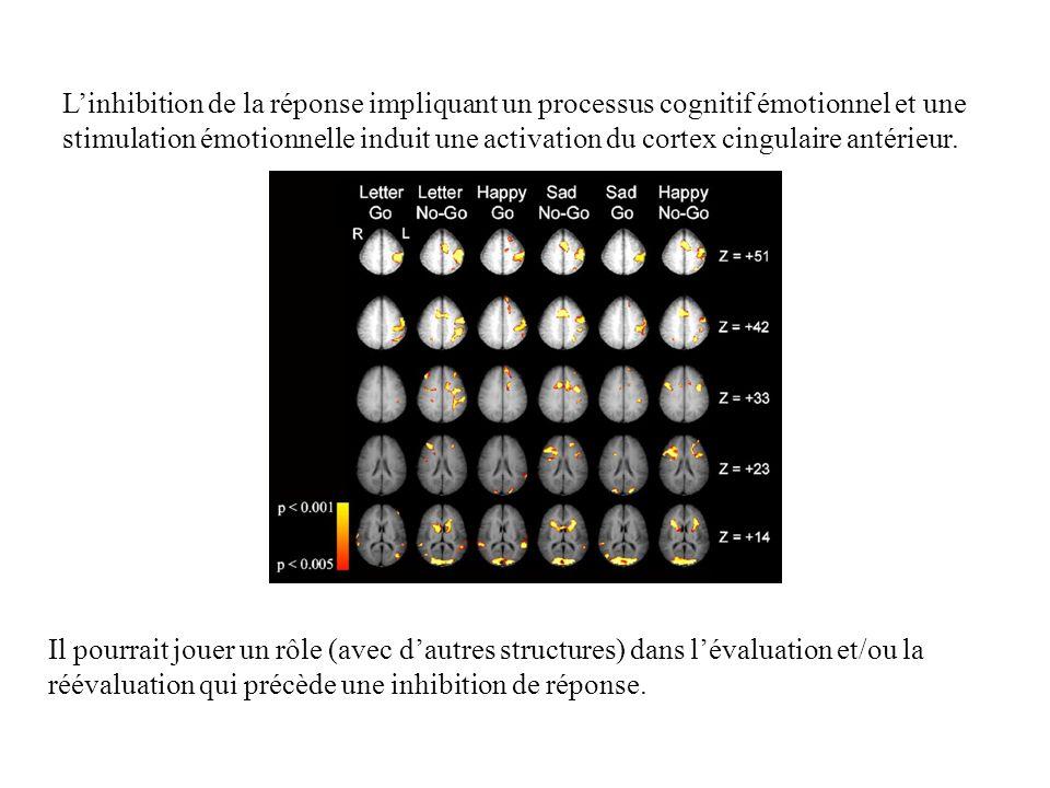 L'inhibition de la réponse impliquant un processus cognitif émotionnel et une stimulation émotionnelle induit une activation du cortex cingulaire antérieur.