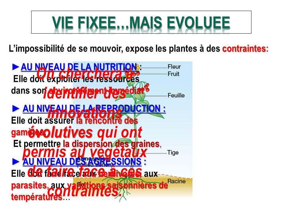 VIE FIXEE…MAIS EVOLUEE