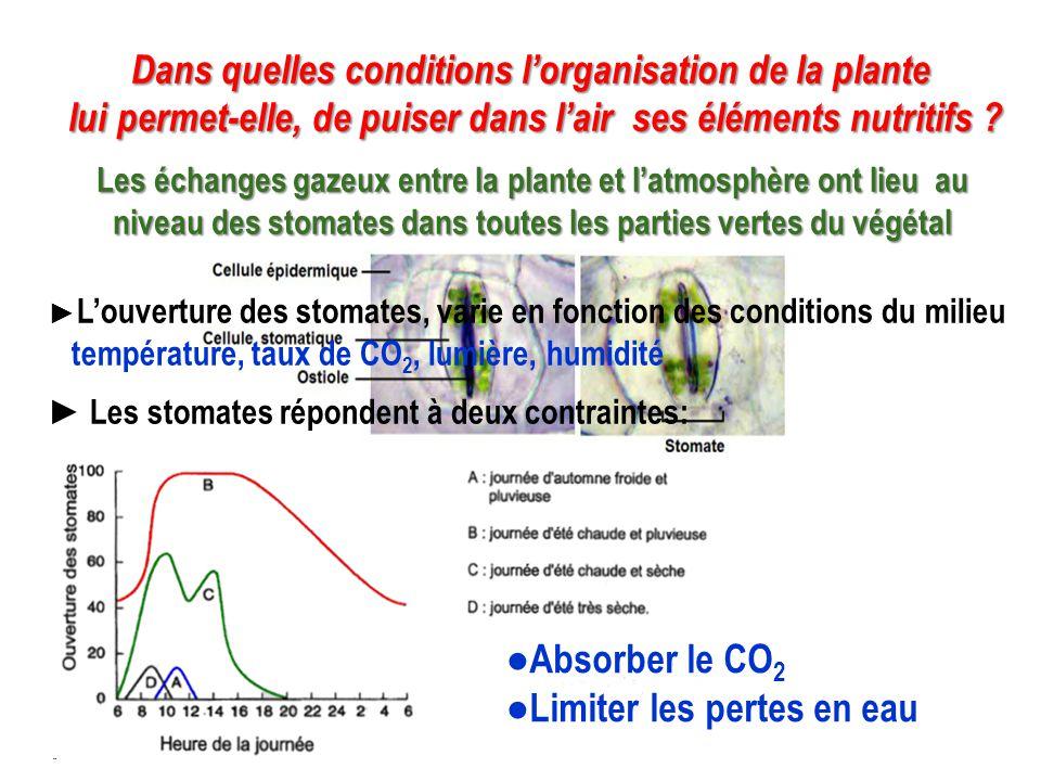 Dans quelles conditions l'organisation de la plante