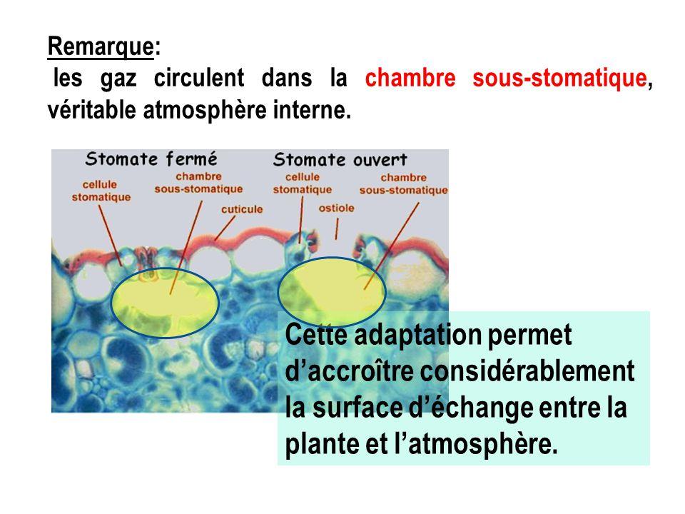 Remarque: les gaz circulent dans la chambre sous-stomatique, véritable atmosphère interne.