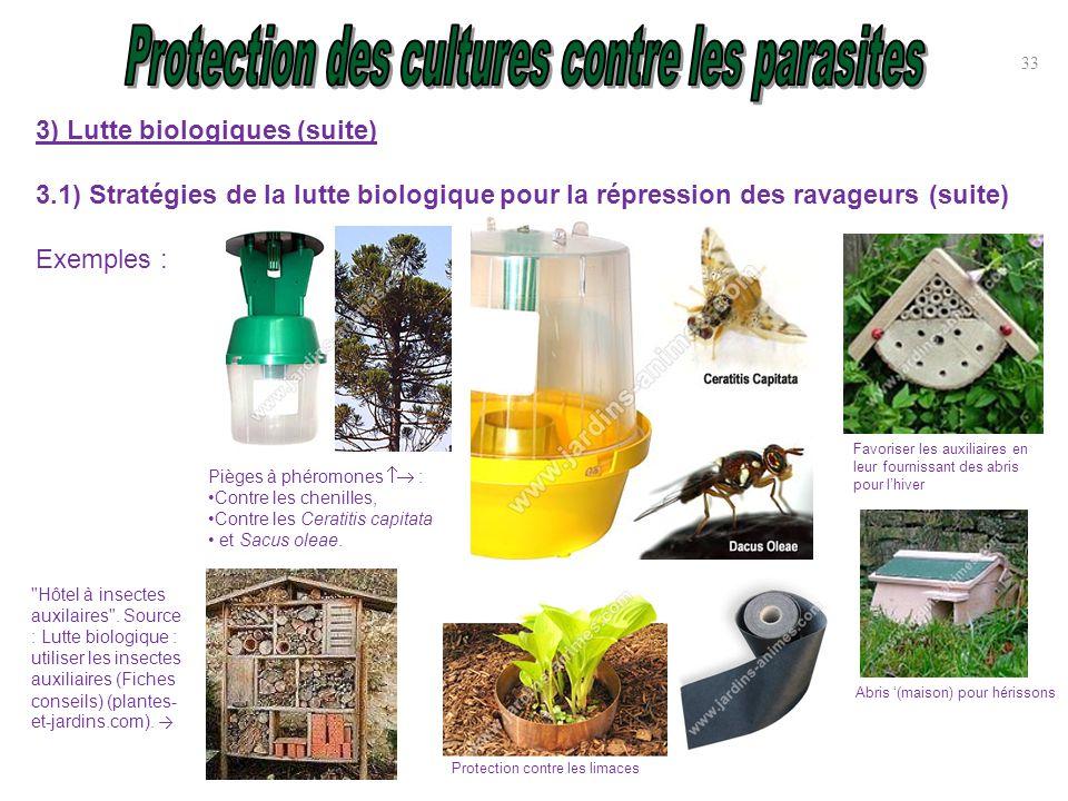 Protection des cultures contre parasites ravageurs et - Pieges a limaces fait maison a base de biere ...