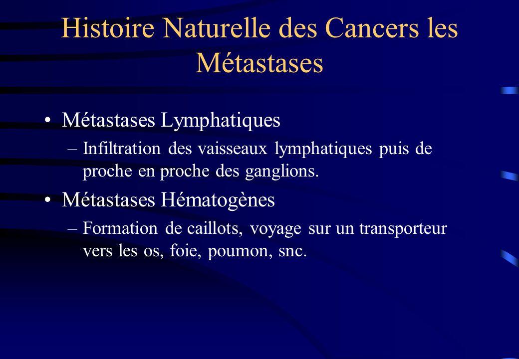 cancers 2009 prolif ration cellulaire propension s tendre ppt t l charger. Black Bedroom Furniture Sets. Home Design Ideas