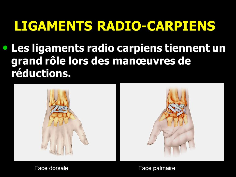 LIGAMENTS RADIO-CARPIENS