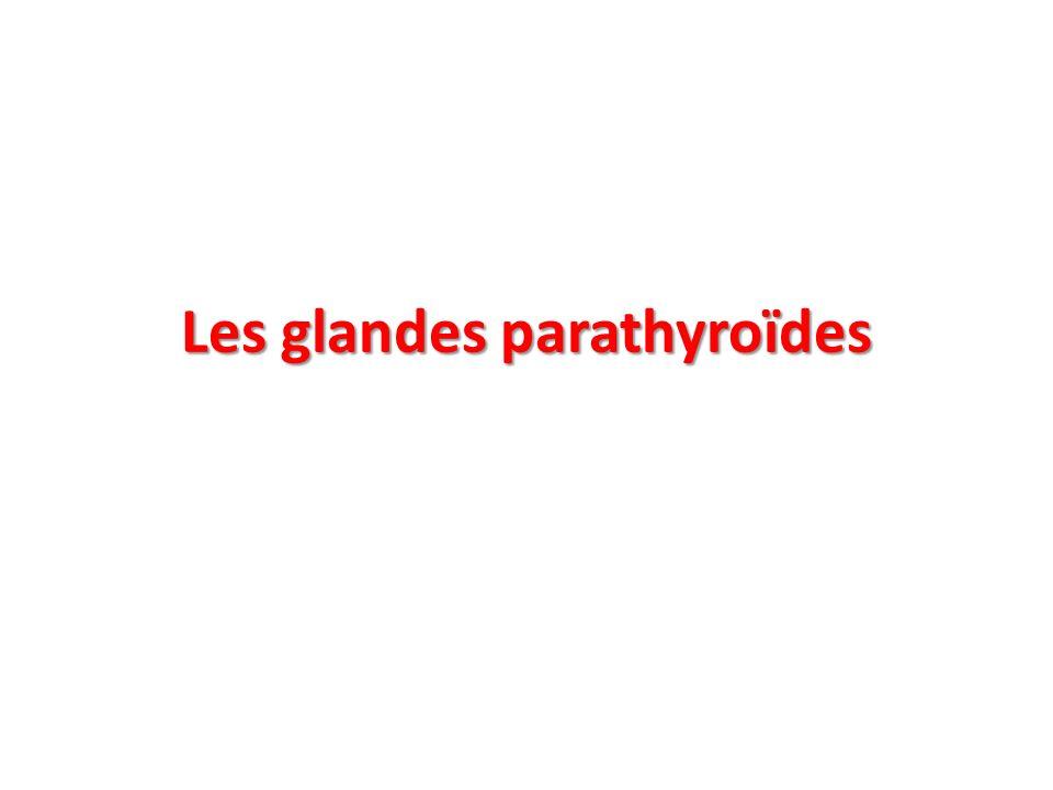 Les glandes parathyroïdes