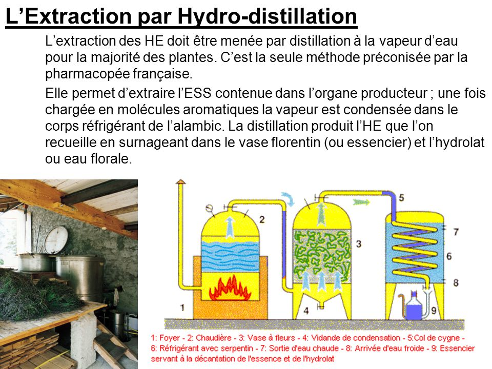 L'Extraction par Hydro-distillation