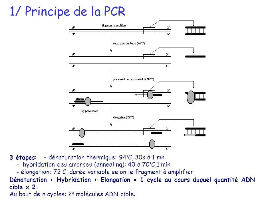 1/ Principe de la PCR3 étapes: - dénaturation thermique: 94°C, 30s à 1 mn. - hybridation des amorces (annealing): 40 à 70°C,1 min.