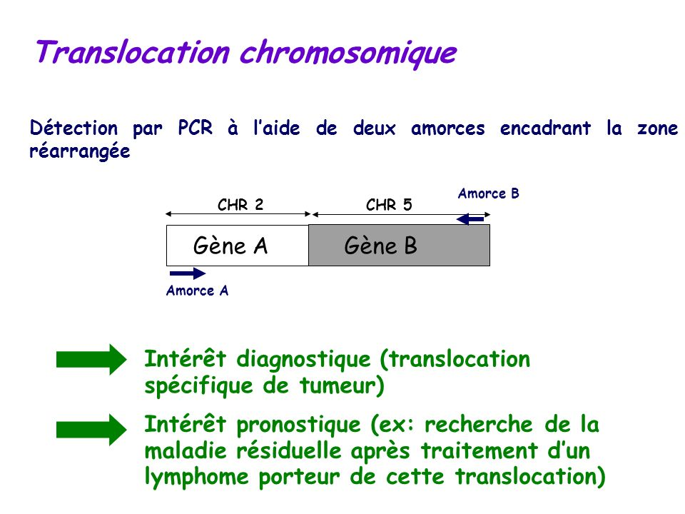 Translocation chromosomique