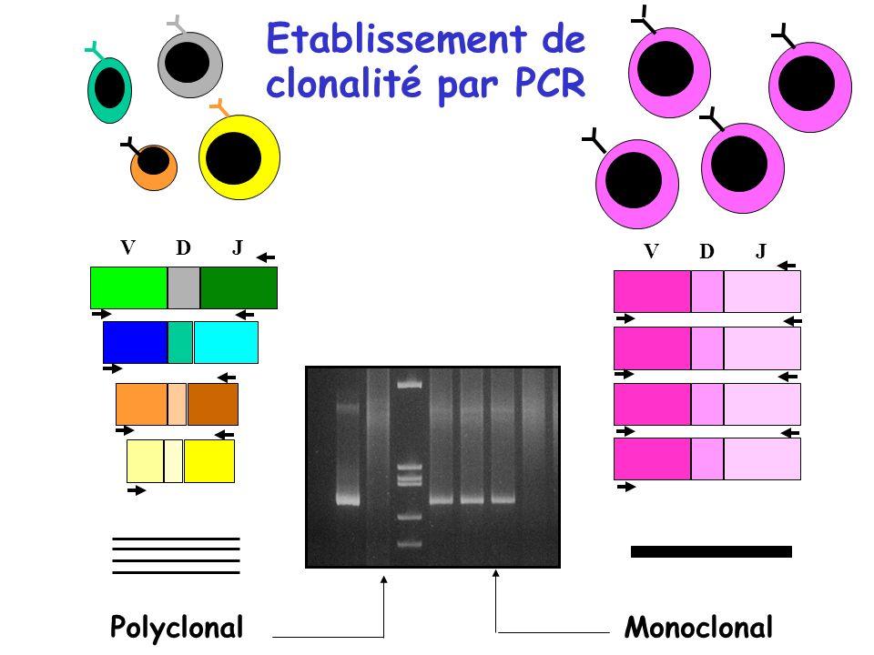 Etablissement de clonalité par PCR