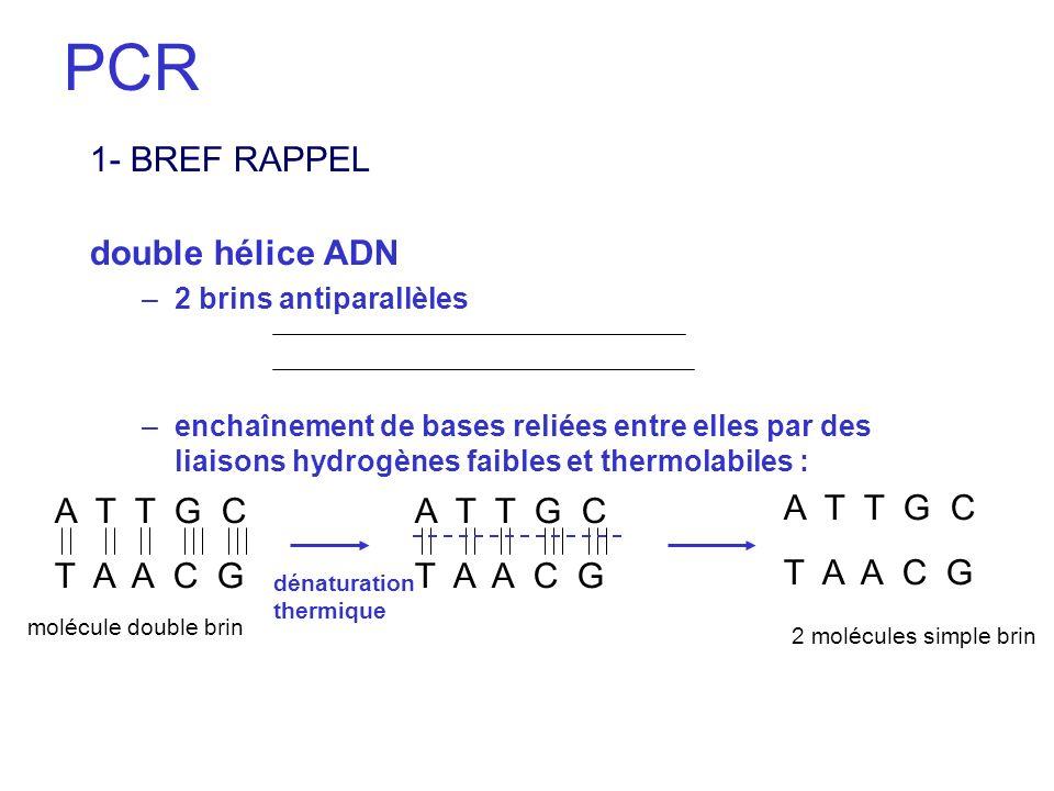 PCR 1- BREF RAPPEL double hélice ADN A T T G C T A A C G A T T G C