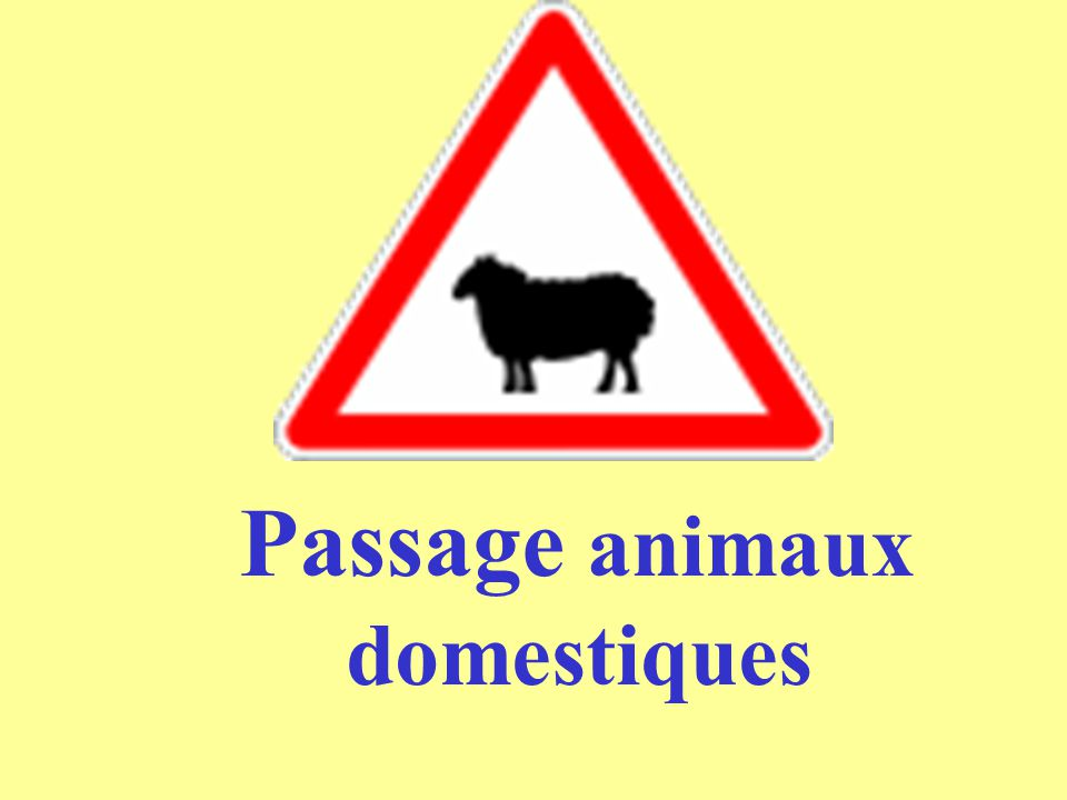 Passage animaux domestiques
