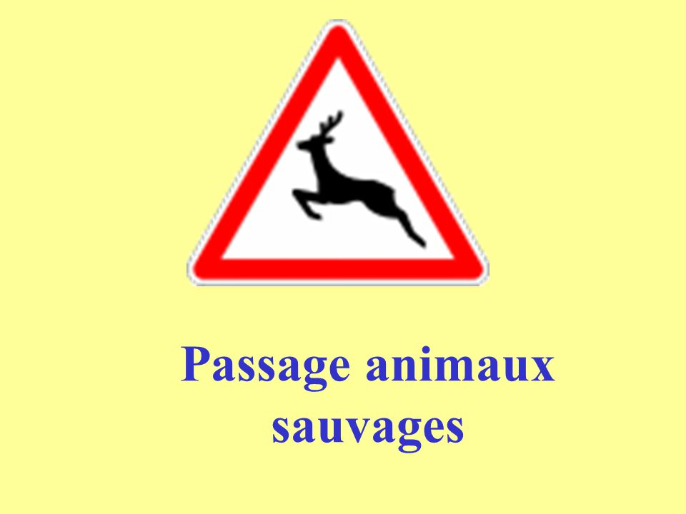 Passage animaux sauvages