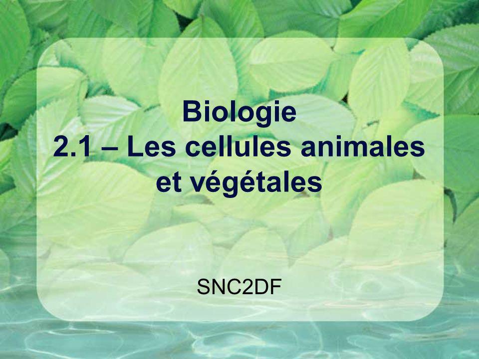 Biologie 2.1 – Les cellules animales et végétales