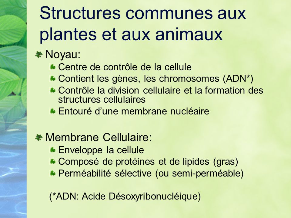Structures communes aux plantes et aux animaux