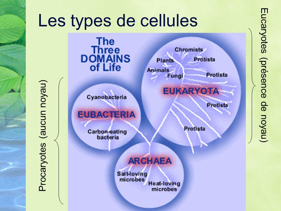 Les types de cellules Eucaryotes (présence de noyau)