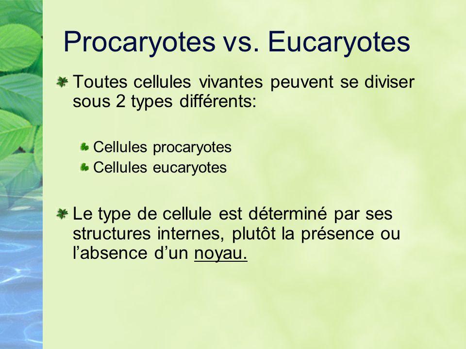 Procaryotes vs. Eucaryotes