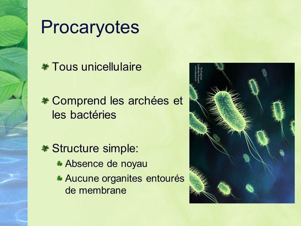 Procaryotes Tous unicellulaire Comprend les archées et les bactéries