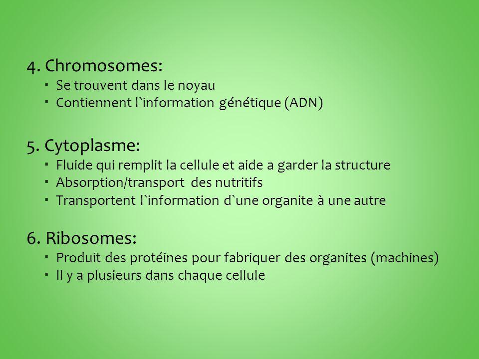 4. Chromosomes: 5. Cytoplasme: 6. Ribosomes: Se trouvent dans le noyau