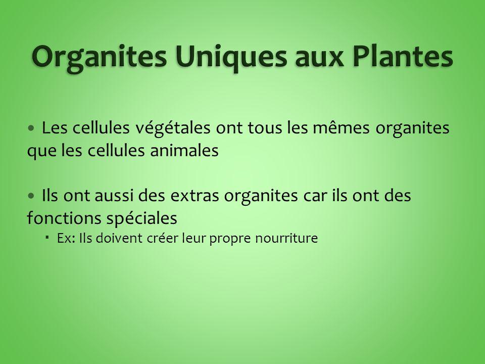 Organites Uniques aux Plantes