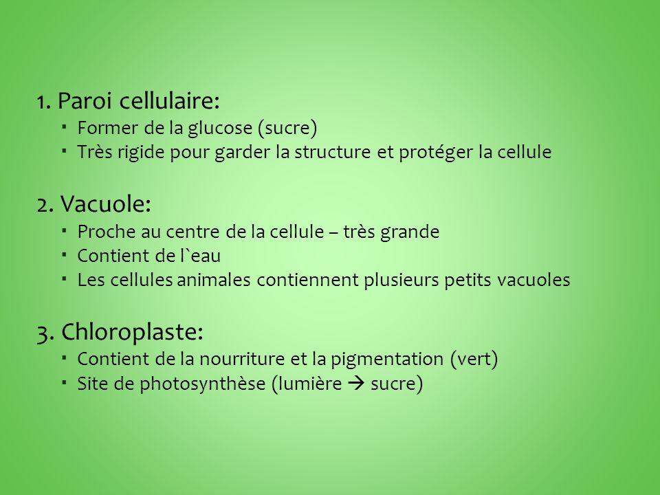 1. Paroi cellulaire: 2. Vacuole: 3. Chloroplaste: