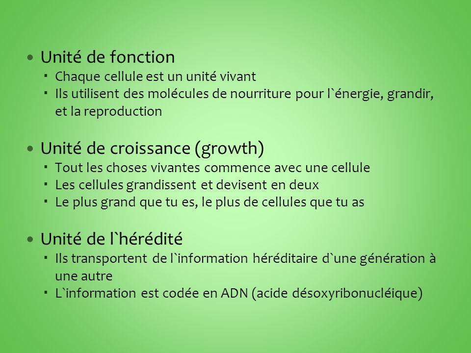 Unité de croissance (growth)