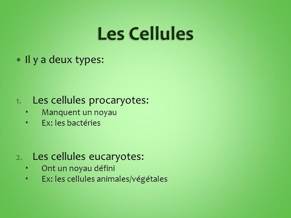 Les Cellules Il y a deux types: Les cellules procaryotes: