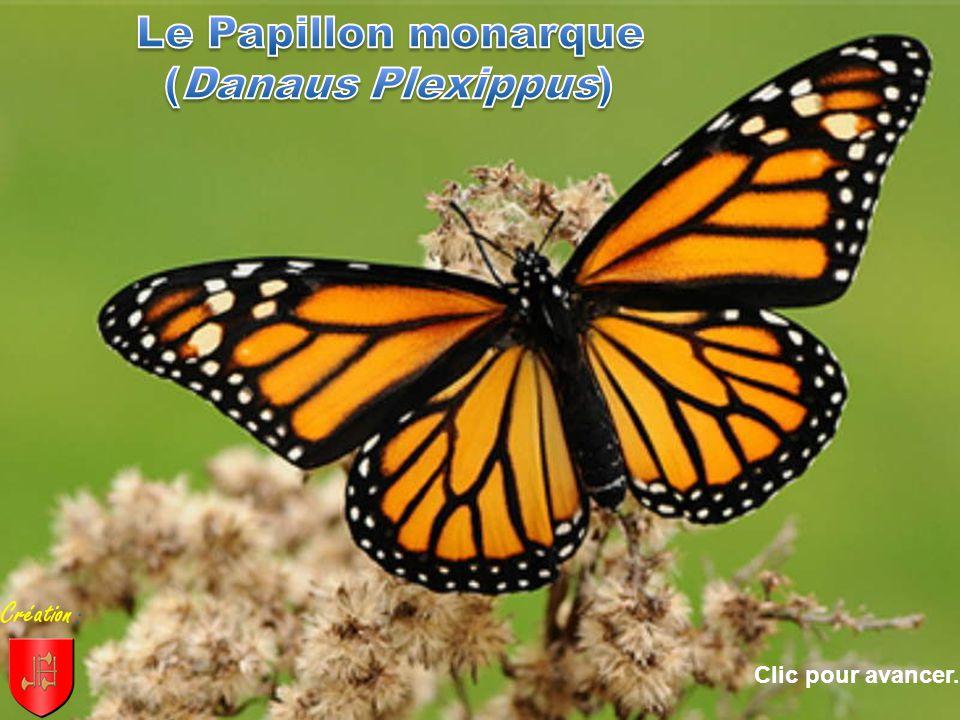 le papillon monarque danaus plexippus cr ation clic pour avancer ppt video online t l charger. Black Bedroom Furniture Sets. Home Design Ideas